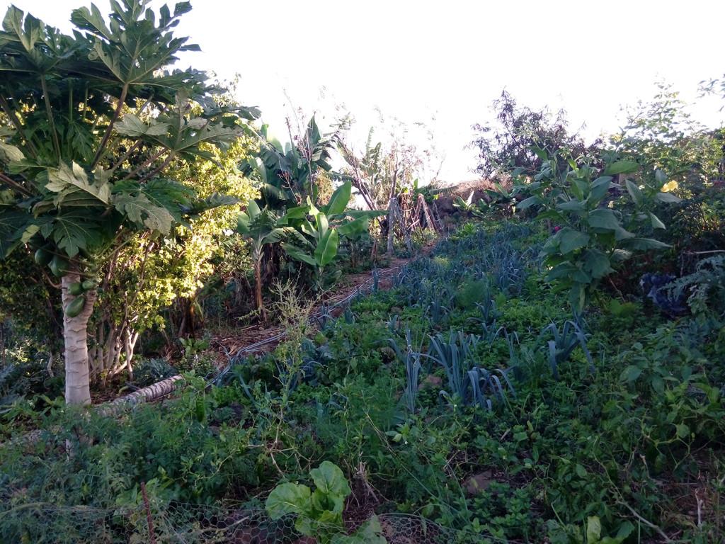 permind_garden